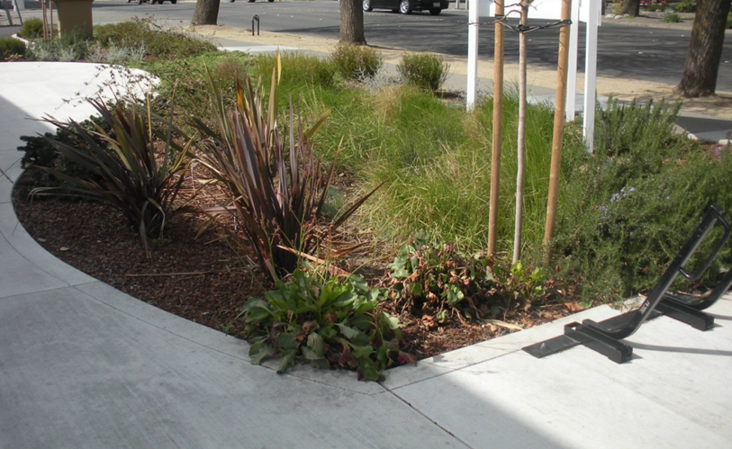 5th street rain garden